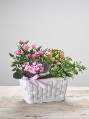 Mother's Day Mixed Planted Basket