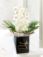 Valentine's Cymbidium Orchid Arrangement with Chocolates