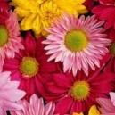 Falkirk Florists Beautiful Summer Flowers