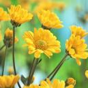 Commonly Used Summer Flowers With The Help of Falkirk Florists