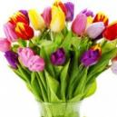 Hire Falkirk Florists for Perfect Flower Delivery